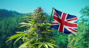 LondonWeed.Net – Top London & UK & Ireland & Scotland